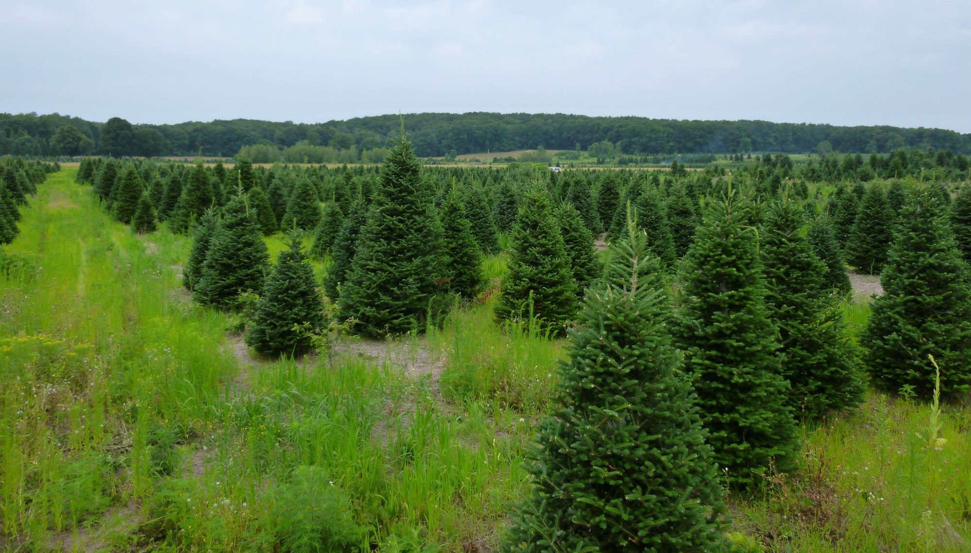 JSFarms Christmas / Nursery Trees